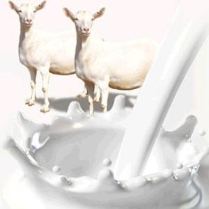 羊奶粉加盟