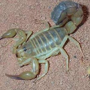 眾生金蝎養殖