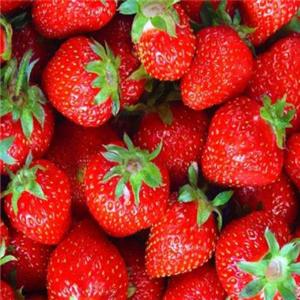興隆草莓誠邀加盟