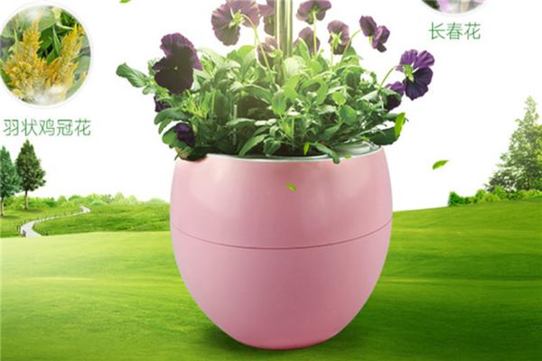 iGrow全自動植物生長機加盟