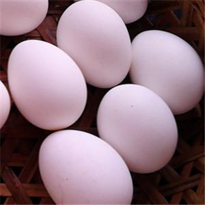 军华禽蛋制品