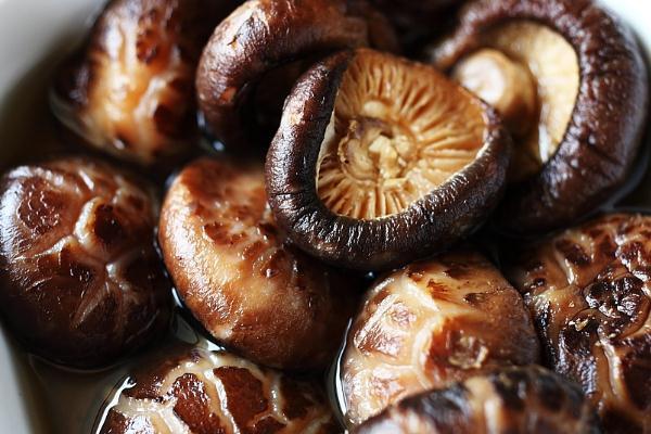 美亞斯白花菇加盟