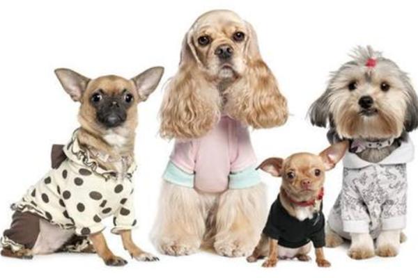 上海寵物店加盟