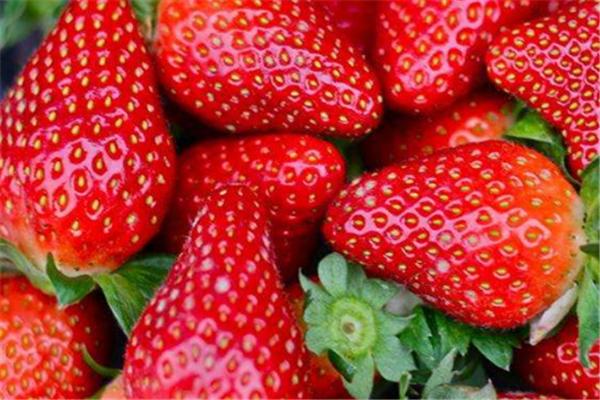 初遇草莓種植園加盟