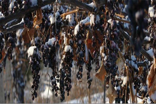 长白山红酒加盟