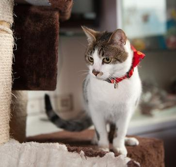 猫咪主题咖啡馆加盟图片