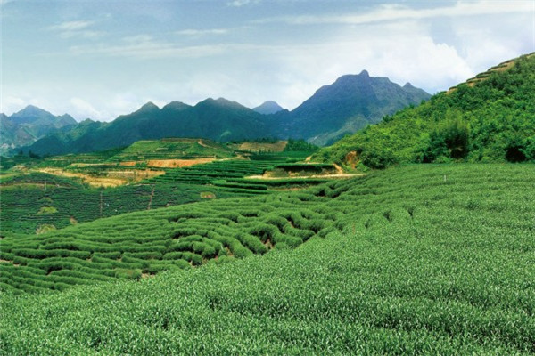 六堡山茶叶加盟