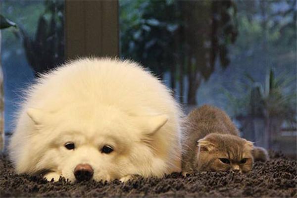 宠儿宠物加盟