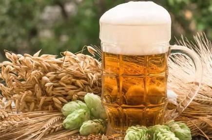纯生啤酒加盟