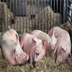 温氏养猪加盟