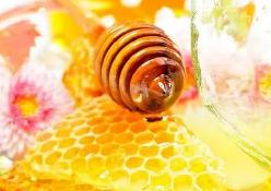 卓津蜂業加盟