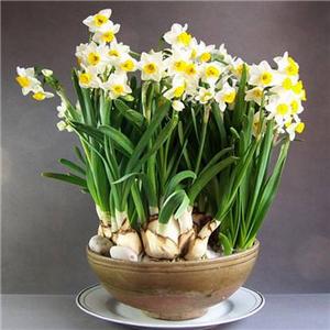 盆栽花卉加盟