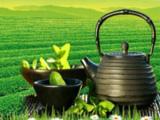金茂茶叶加盟