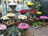 上地鮮花店加盟