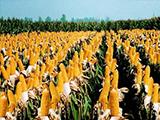 东福米粮加盟